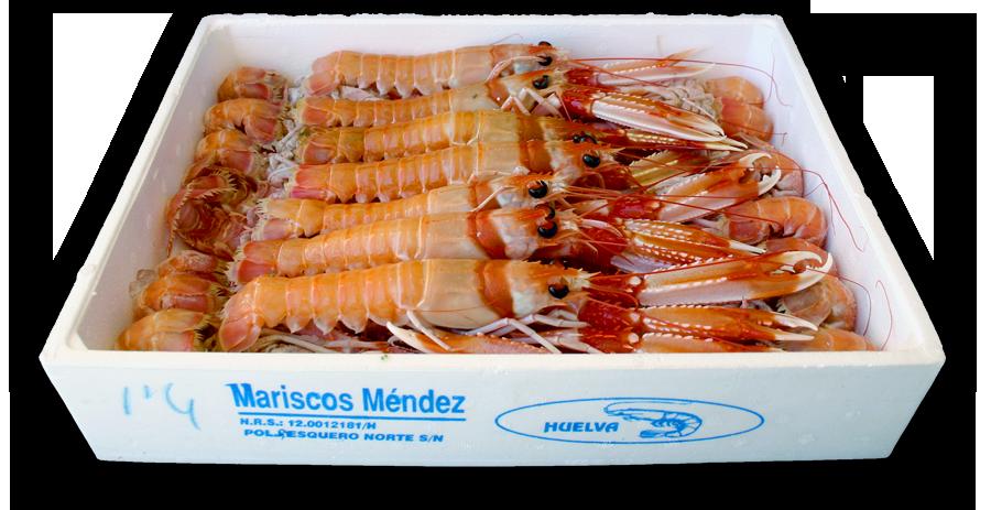 Cigalas de Huelva en bandeja de porex